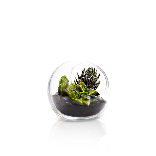 Mini Fishbowl