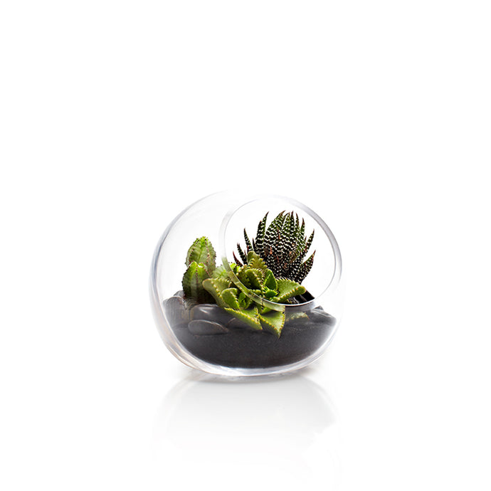 Mini Fishbowl - H.Bloom