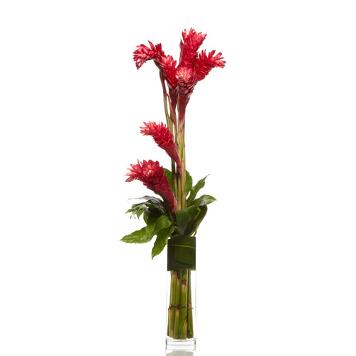 Red Ginger Flower with Modern Greenery-  H.Bloom