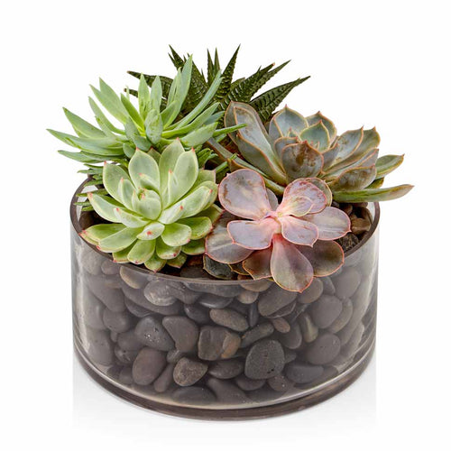 A glass dish filled with moss or stone and an assortment of premium succulents.