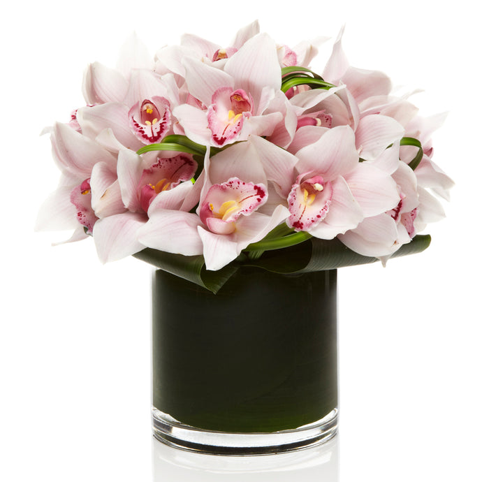 Luxury Blush Cymbidium Orchid Arrangement - H.Bloom