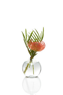 Protea Bud Vase Set of 6 - H.Bloom