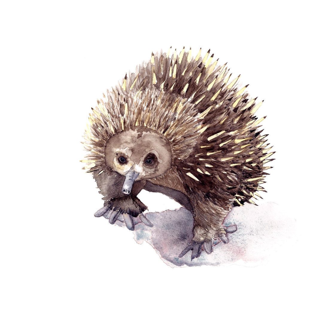 Echidna Watercolour Print - Winter Owls
