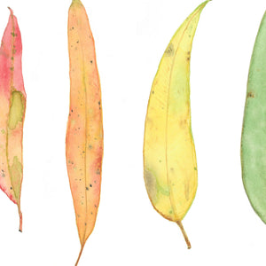 Colourful Gum leaves Watercolour Print, A4 or A3 Eucalyptus Leaf Wall Art - Winter Owls