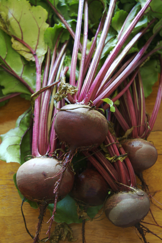 Beta Vulgaris, Beetroot - Detroit 2 Bolivar, Organic