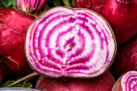Beta Vulgaris, Beetroot - Chioggia, Organic