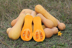 """Cucurbita moschata Butternut 2012 G2"" by George Chernilevsky - Own work. Licensed under Public Domain via Wikimedia Commons."