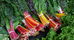 """Swiss Chard Rainbow"" by Alex from Ithaca, NY - Swiss Chard Rainbow. Licensed under CC BY 2.0 via Wikimedia Commons - https://commons.wikimedia.org/wiki/File:Swiss_Chard_Rainbow.jpg#/media/File:Swiss_Chard_Rainbow.jpg"