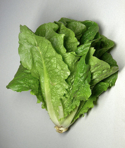 Lactuca sativa, Lettuce - Little Gem, untreated