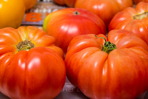 Lycopersicon esculentum, Tomato - Super Marmande