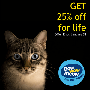 Pet Insurance (Special)