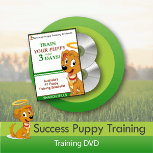 Success Puppy Training - Training DVD