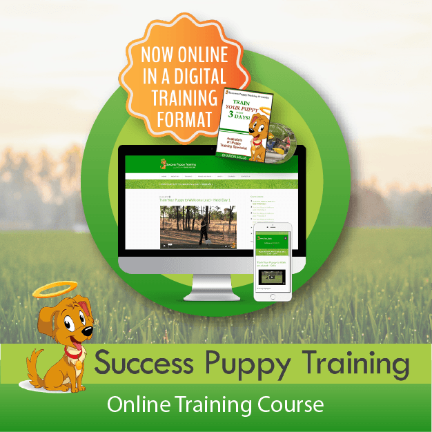 Success Puppy Training - Online Course