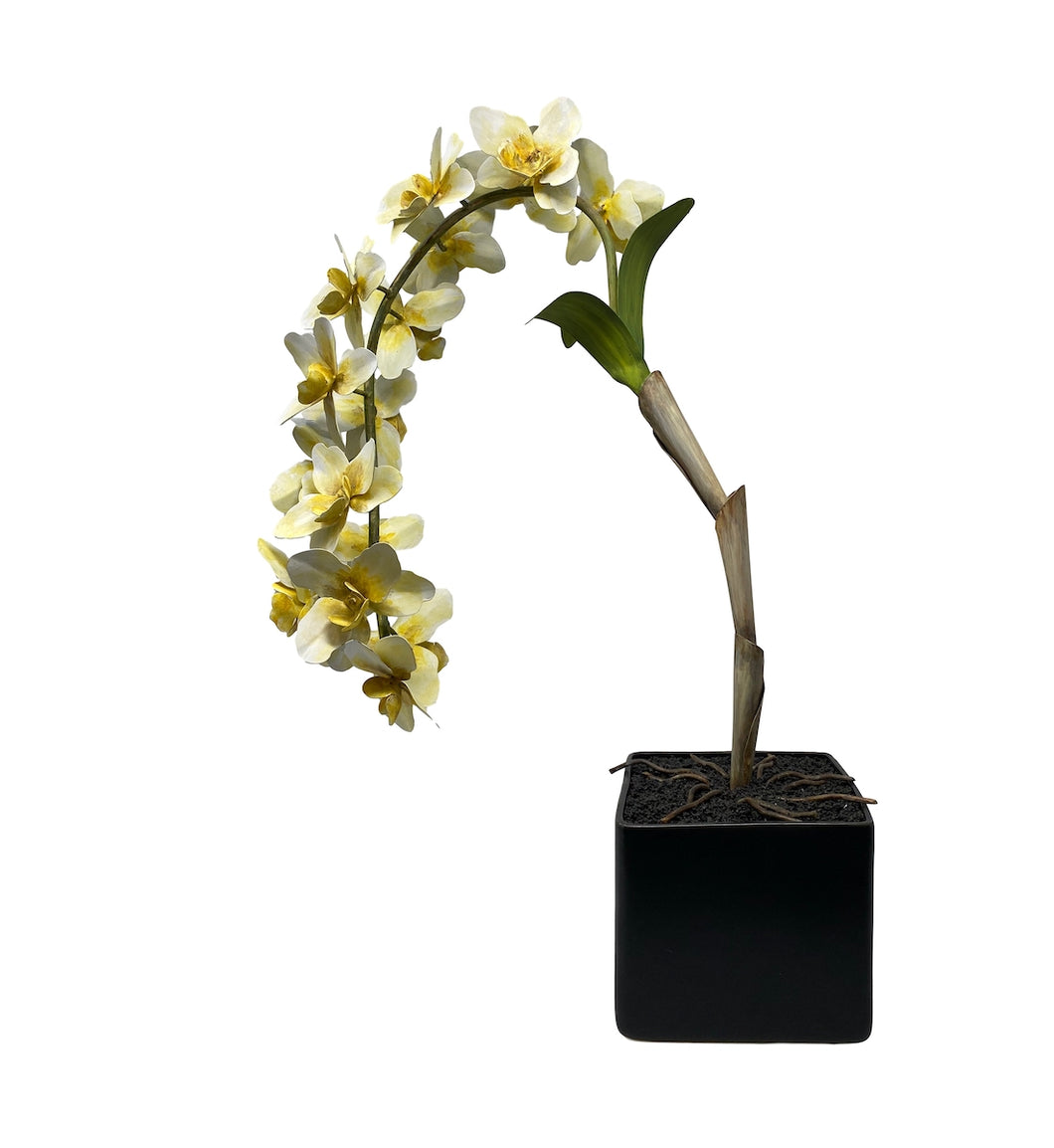 Tommy Mitchell Potted Fleur - Large Soft Yellow Orchid