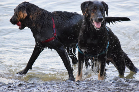 How to eliminate odors from your dog without a bath