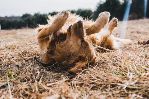 How to freshen up your dog without a bath