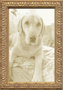 Thin Gold Vintage Ornate Picture Frame