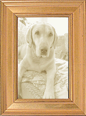Classic Gold Leaf Panel Picture Frame