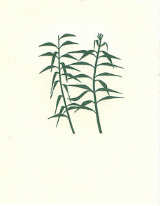 letterpress whimsical blank notes bamboo