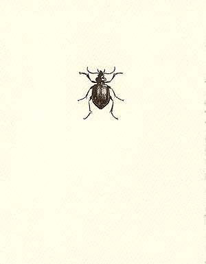 letterpress whimsical blank notes beetle