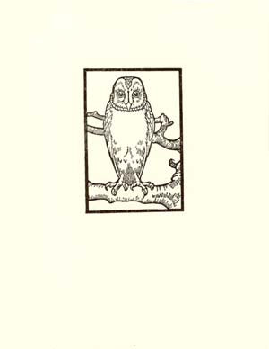 letterpress whimsical blank notes owl