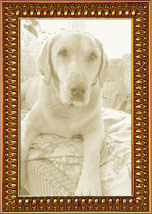 Narrow Gold Tooth Ornate Picture Frame