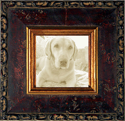 Ornate Picture Frames Wide Mahogany Burl