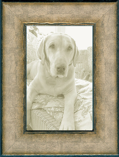 Soft Silver Transitional Picture Frame