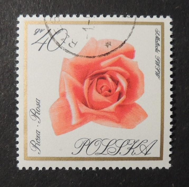 Poland 1966 flowers rose fine used