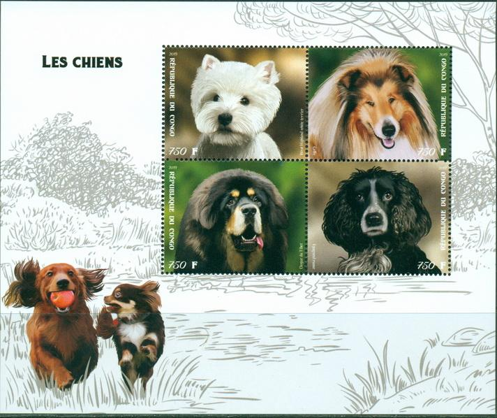 Congo 2019 dogs MS 4 values