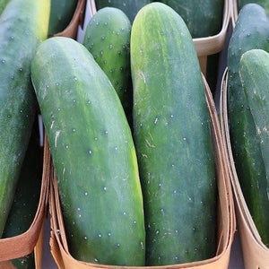 Cucumber - Marketmore