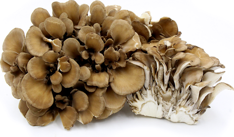 MUSHROOMS- HEN OF THE WOODS