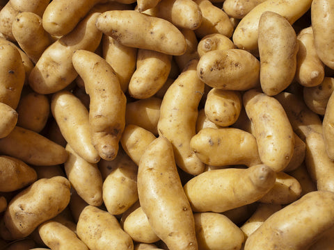 POTATO- FINGERLING