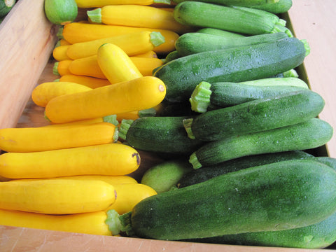 SQUASH- GREEN + YELLOW