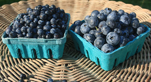 BLUEBERRIES- QUART