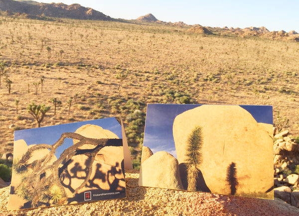 "Joshua Tree Double-Sided Greeting Card:  ""Lifecycle"""