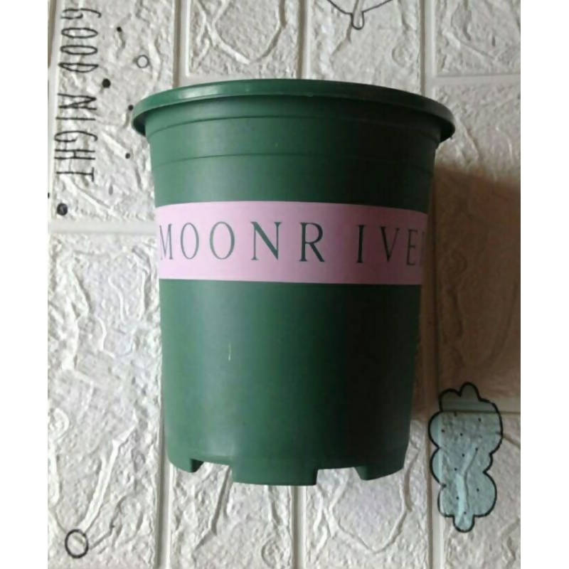 COD | Green Round Pot Moonriver Printed Design