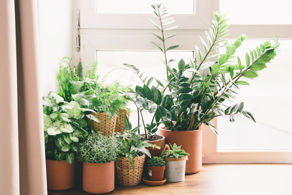 Houseplants make great gifts for daycare teachers