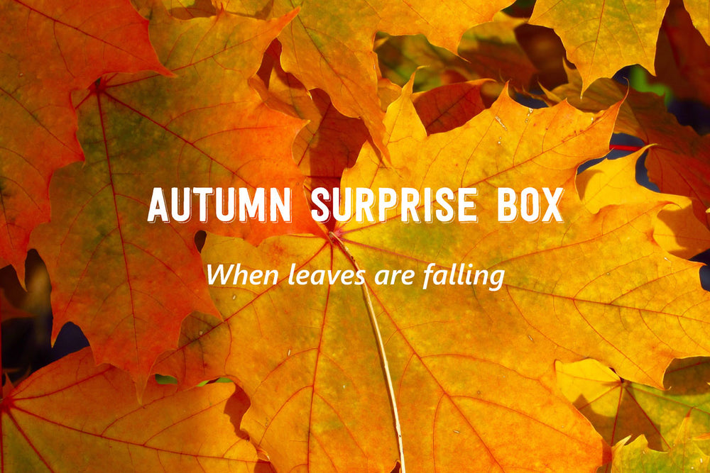 Autumn Surprise Box - Vorverkauf bis 30.09.2020 - B.TEALY