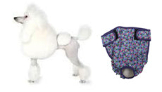 Small Dog Diaper - Seasonals Dog Diapers