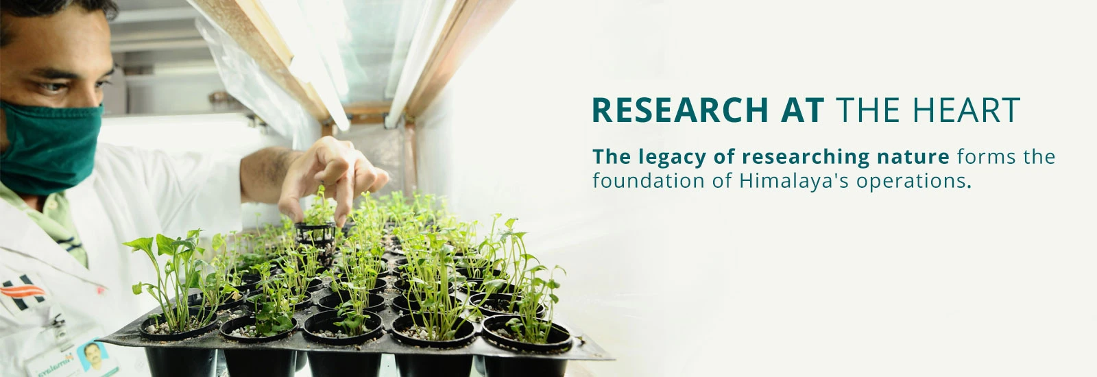 Scientist working on herbs - Research at the heart - The Himalaya Drug Company