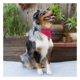 Bandana Collar - Natura Red