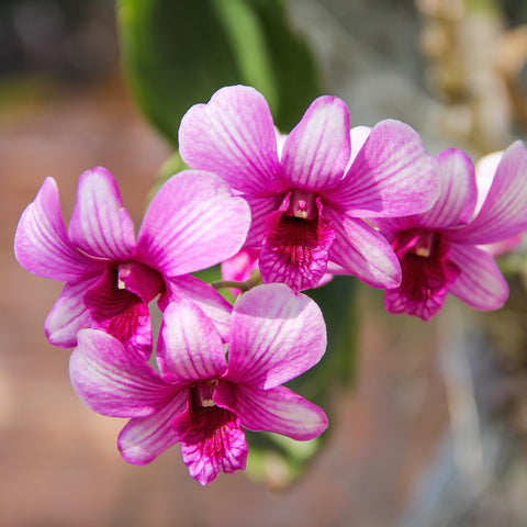 Grow with the Gardens - Mounting an Orchid