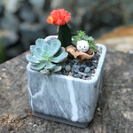Gardens by the Bay - Plant Collection - The Mini Garden Series - Calm Series: Succulent in cube container with Owl figurine F