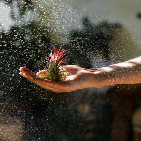 Eco Explorers - Air Plant Madness (For children aged 7 to 12 years old)