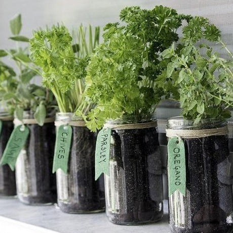 Grow with the Gardens - Mason Jar Herbs Collection