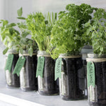 Grow with the Gardens - Mason Jar Herbs Collection Virtual Workshop