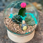 Gardens by the Bay - Plant Collection - The Mini Garden Series - The Glass Bowl Type A