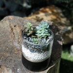 Gardens by the Bay - The Mini Garden Series - Father's Day Collection - Duke Series K