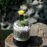 Gardens by the Bay - The Mini Garden Series - Father's Day Collection - Duke Series G